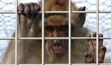 Sperimentazione animale, l'Europa delude le aspettative
