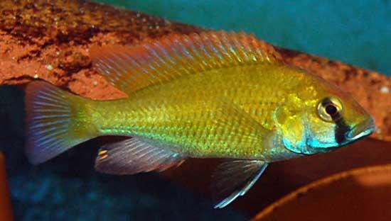 Anche i pesci provano delusione