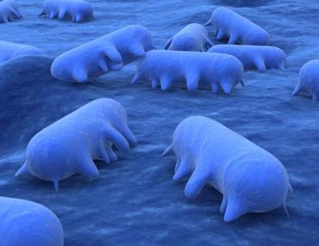 Batterio contro virus: 1 a 0