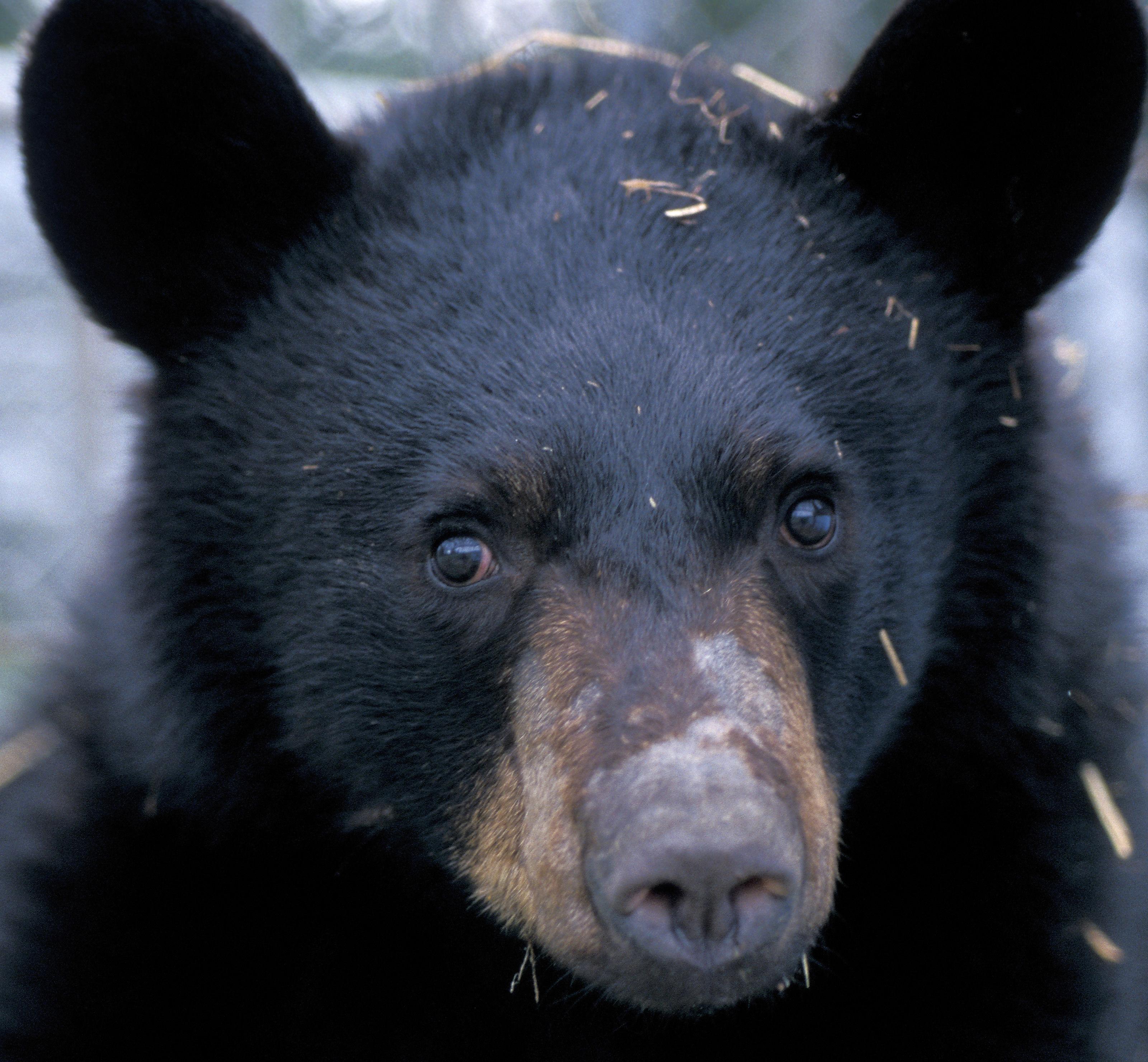 Dal grande sonno degli orsi bruni ai viaggi spaziali