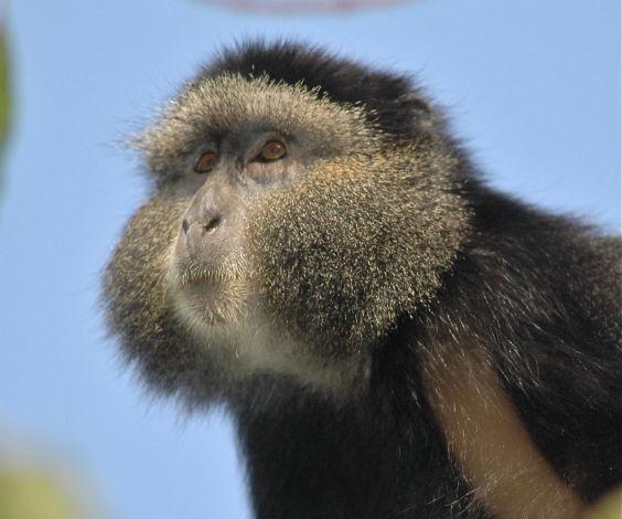 Scimmie e umani, simili anche nell'invecchiamento