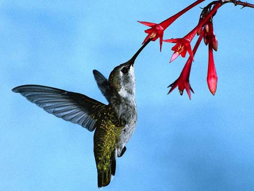 Il sorso del colibrì