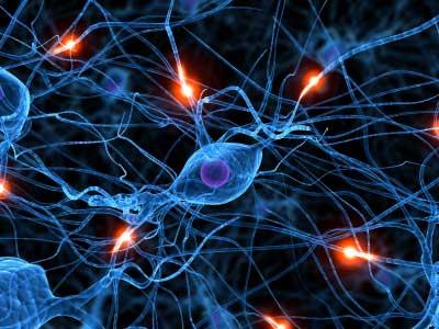 Verso il trapianto di neuroni