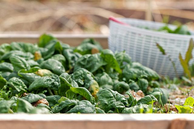 Fotovoltaico agli spinaci