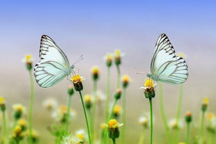 insetti impollinatori fiori