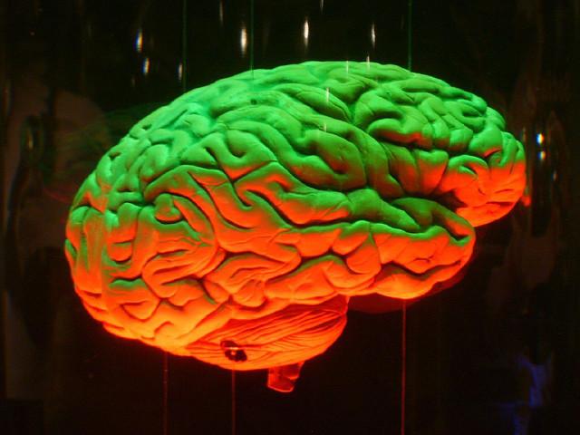 Così il cervello ci fa rispettare le norme sociali
