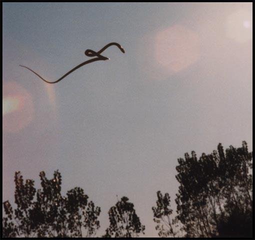 Come volano i serpenti