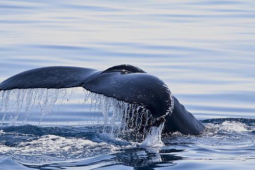 Come seguire le balene dallo Spazio