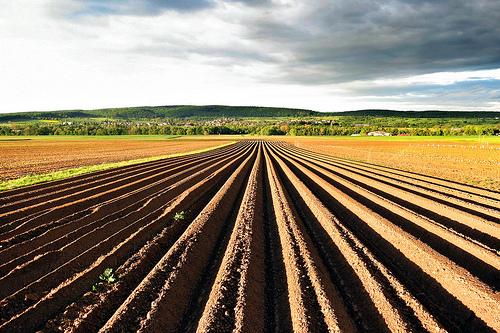 Così l'agricoltura diventa più sostenibile