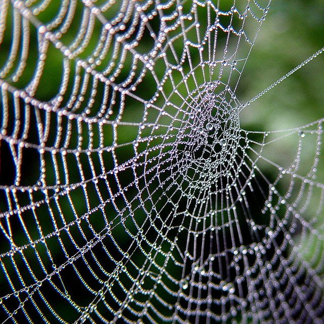 I segreti della tela del ragno