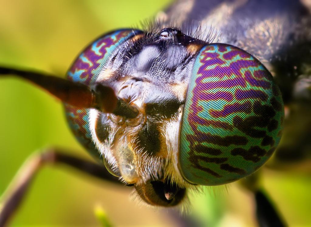 insetti come mangimi, l'idea è made in italy - galileo