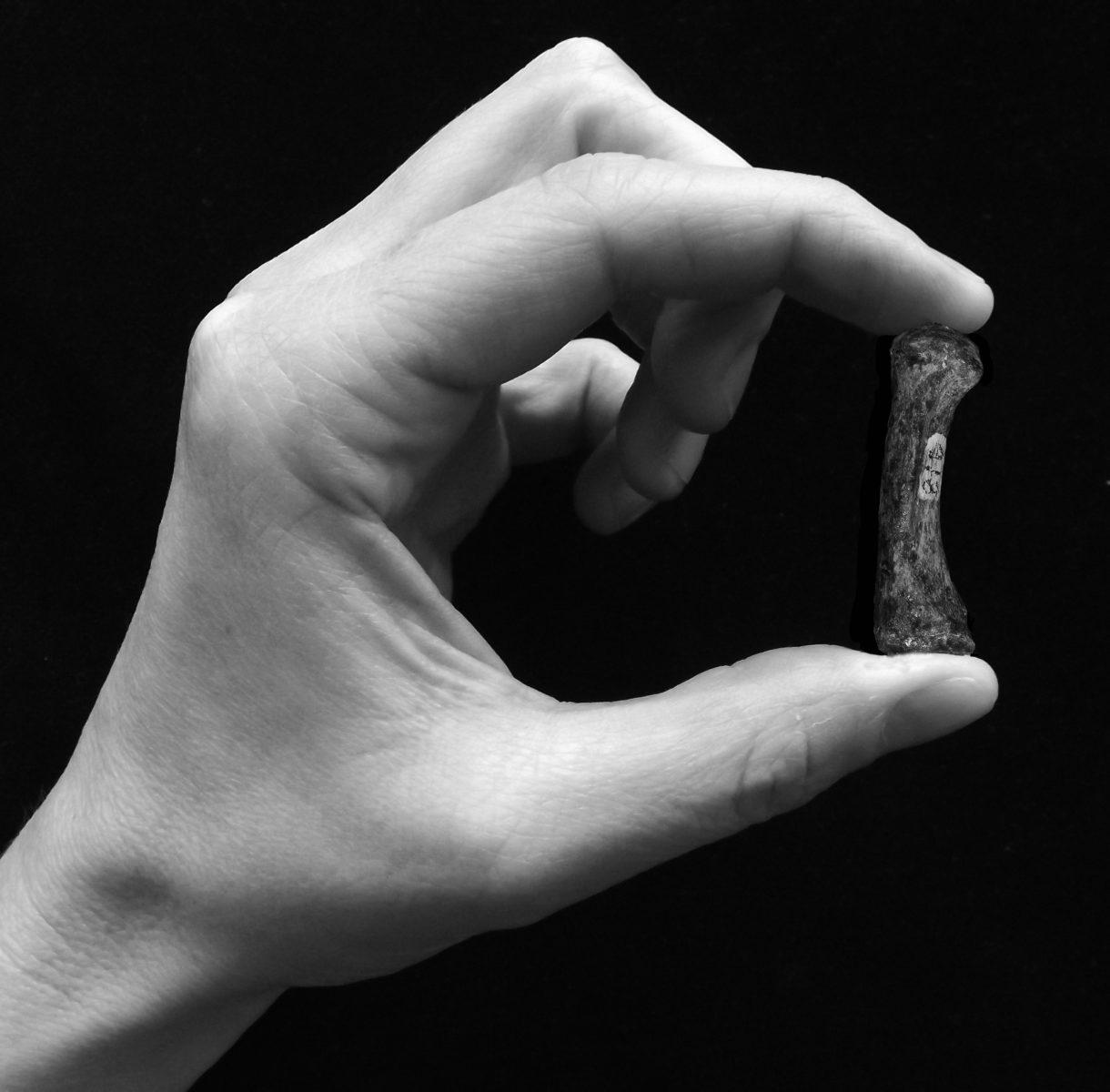 pollice opponibile autralopitechi