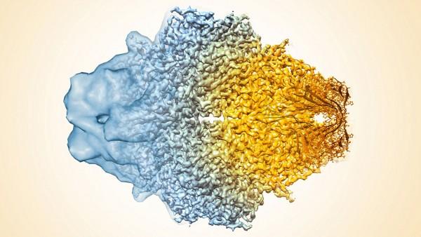 """La microscopia """"fredda"""" per l'analisi di nuovi farmaci"""