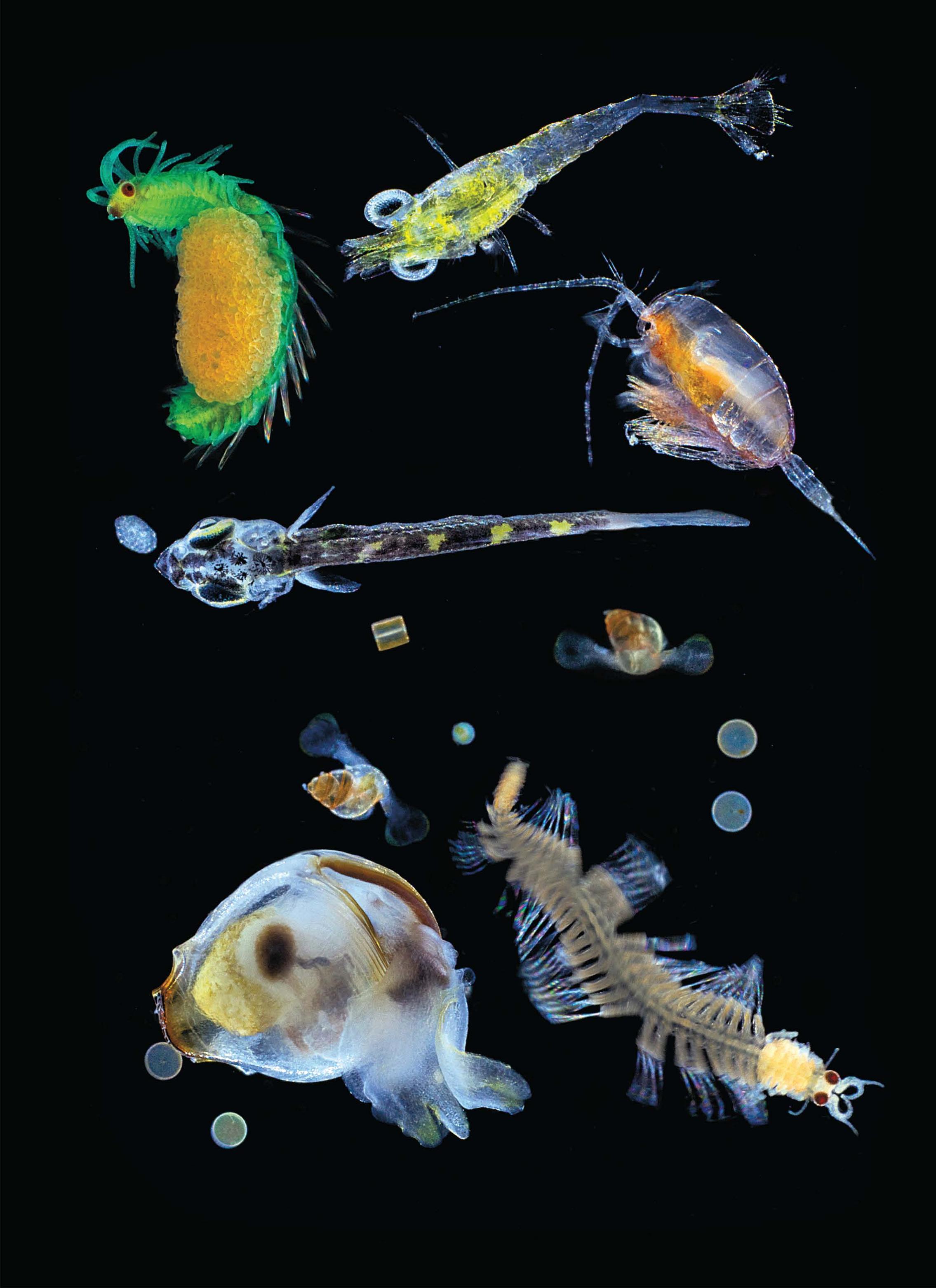Dalla spedizione Tara il più grande catalogo del plancton