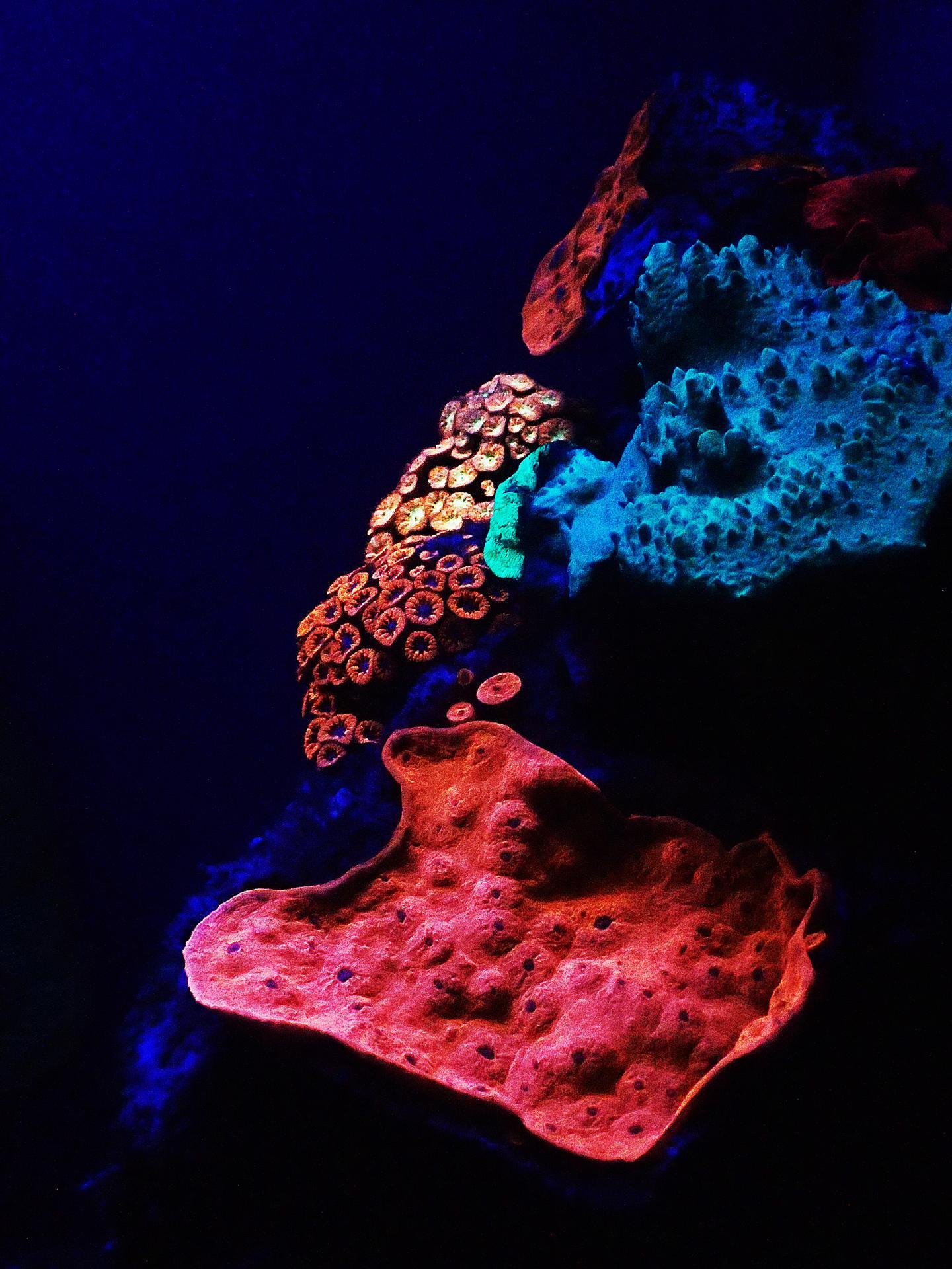 I coralli fluorescenti del Mar Rosso