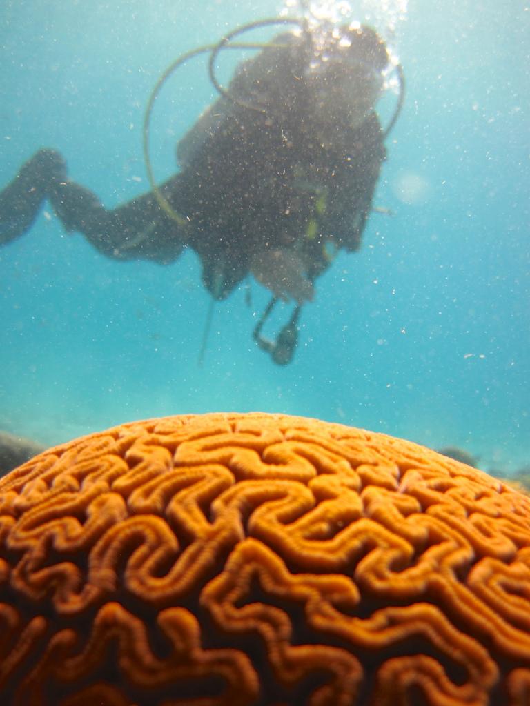 Studiare il cervello… con l'acqua