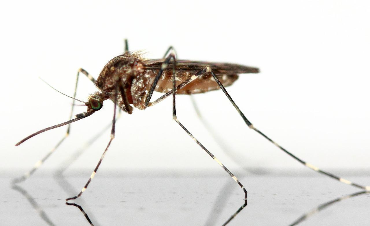 Da cosa sono attirate le zanzare - Galileo