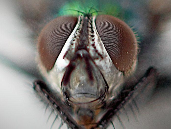 insetti leggi turing