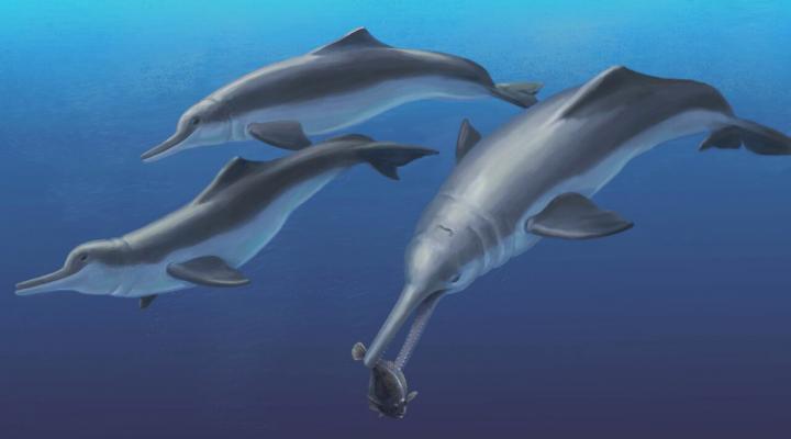 Un delfino di sei milioni di anni