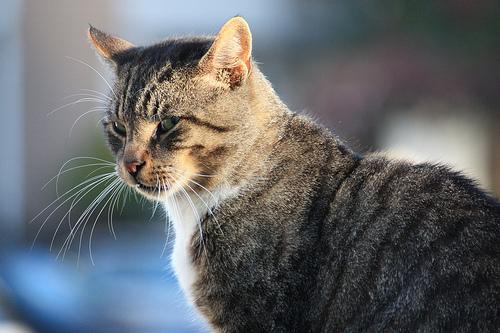 Perché I Gatti Vivono Più A Lungo Dei Cani Galileo