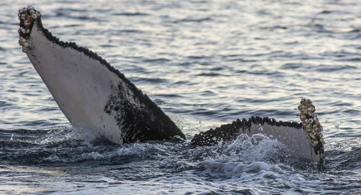 Strage di balene in Antartide - Galileo