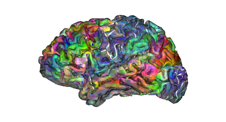 L'atlante delle parole nel cervello - Galileo