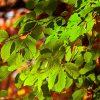Cos'è la fotosintesi inversa?