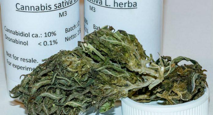 la cannabis terapeutica