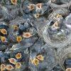 Erode Birds sventa una strage di innocenti