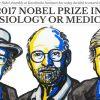 I ritmi circadiani conquistano il premio Nobel per la Medicina