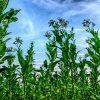Contro la siccità, ecco le piante che consumano meno acqua