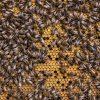 Come capire il nostro cervello guardando le api