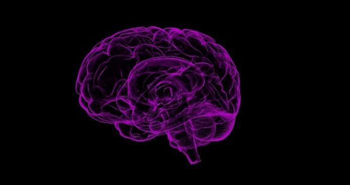 Dennett evoluzione della mente