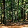 Aree naturali protette, un terzo a rischio per le attività umane