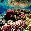 Grande barriera corallina: 500 milioni di dollari per salvarla