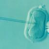 Dal 1978, più di 8 milioni di bambini sono nati grazie alla fecondazione in vitro