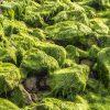 Dalle alghe il segreto  per trasferire energia in modo efficiente