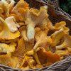decalogo raccolta funghi