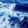Più meduse e acqua torbida, come sta cambiando il mare