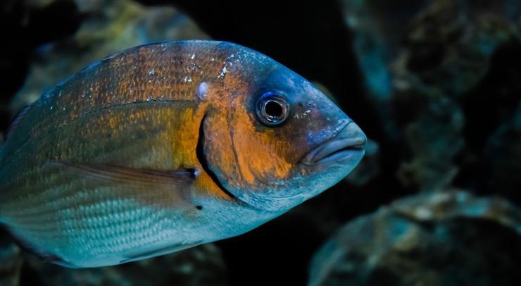 quanti pesci