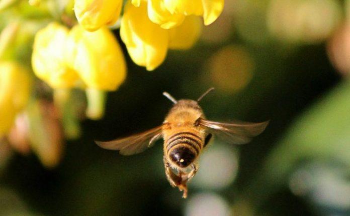 dna nel miele