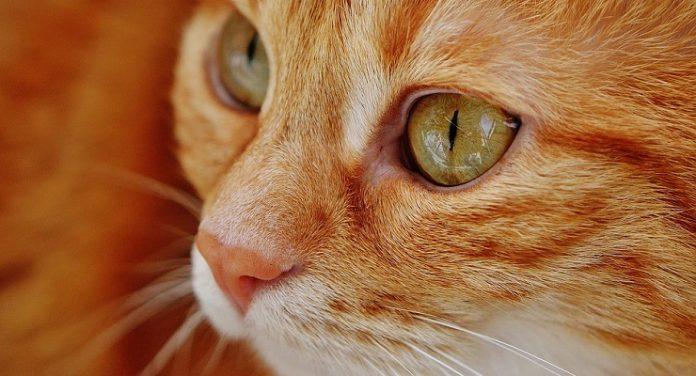 nome del gatto