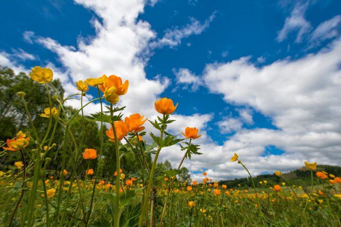 fioriture di primavera
