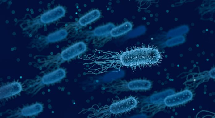 ansia microbioma intestinale