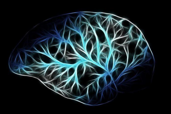 curiosità cervello