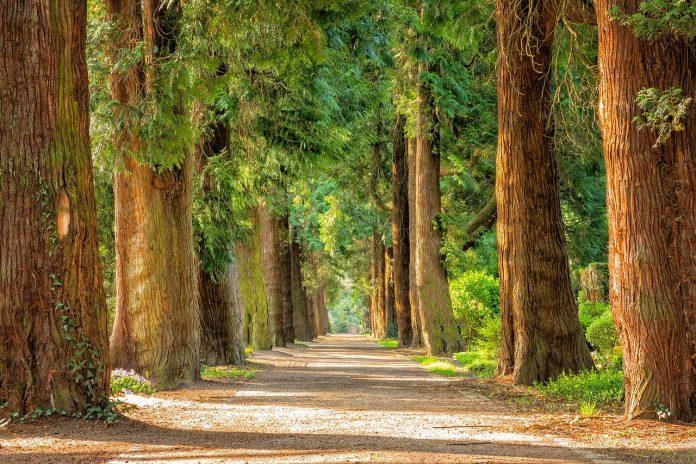 alberi mente salute
