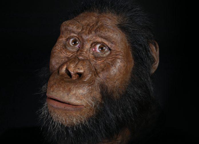Australopithecus anamensis aantenato lucy