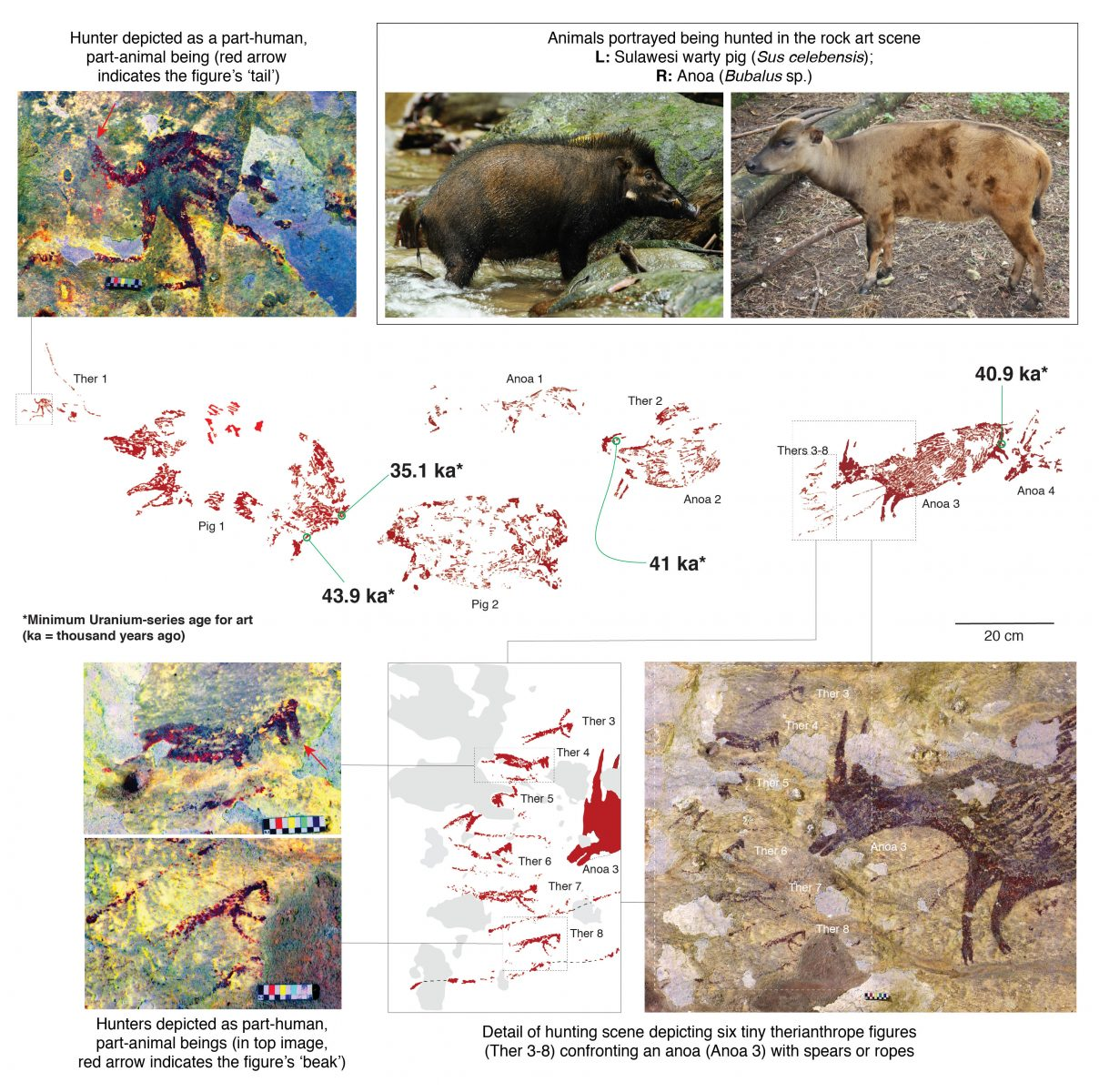 In una grotta a Sulawesi, in Indonesia, è stata scoperta una pittura rupestre vecchia di 44 mila anni. Raffiugura una scena di caccia e potrebbe nascondere significati religiosi