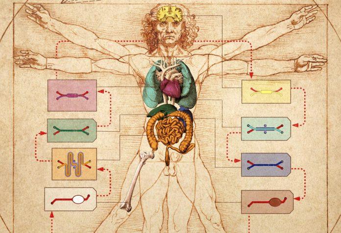 corpo umano su un chip