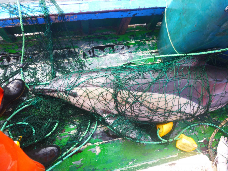 Reti a led per salvare tartarughe marine e piccoli cetacei
